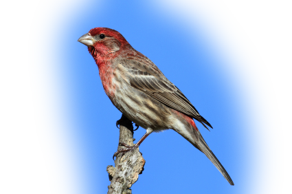 Bird Seed Doesn't Spoil? Featured Image