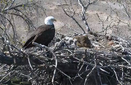 Eagle'snest