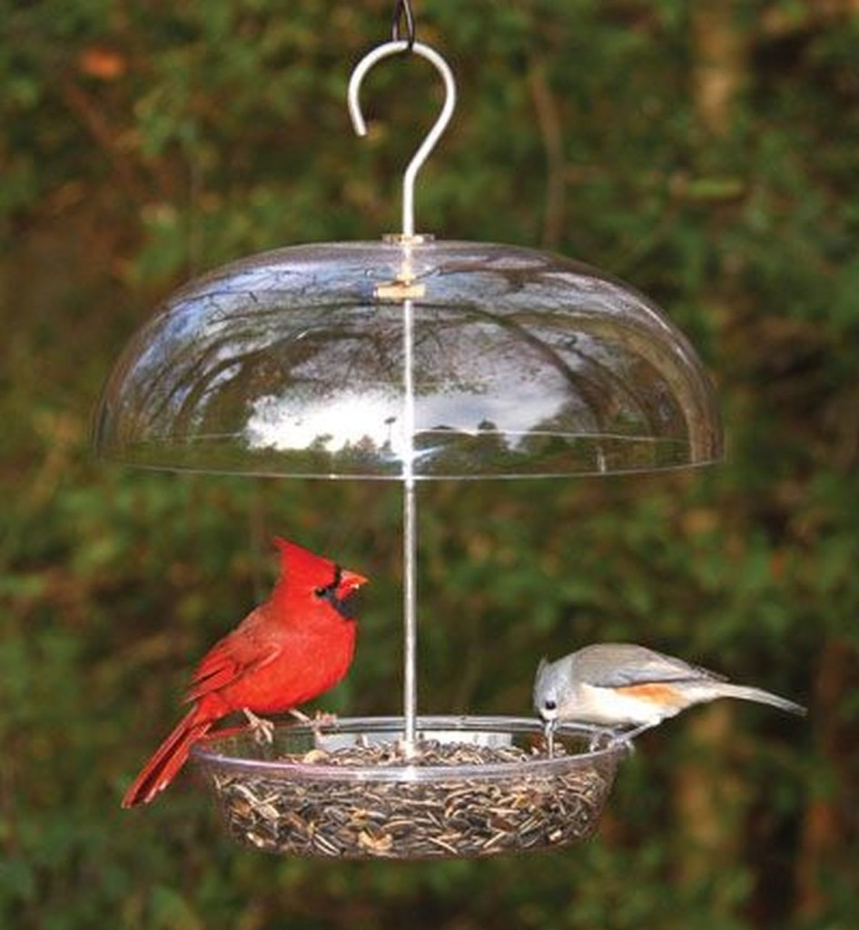 How Often Should I Clean My Bird Feeders? Featured Image