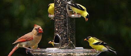 Birds that Like Blue Ribbon Blend