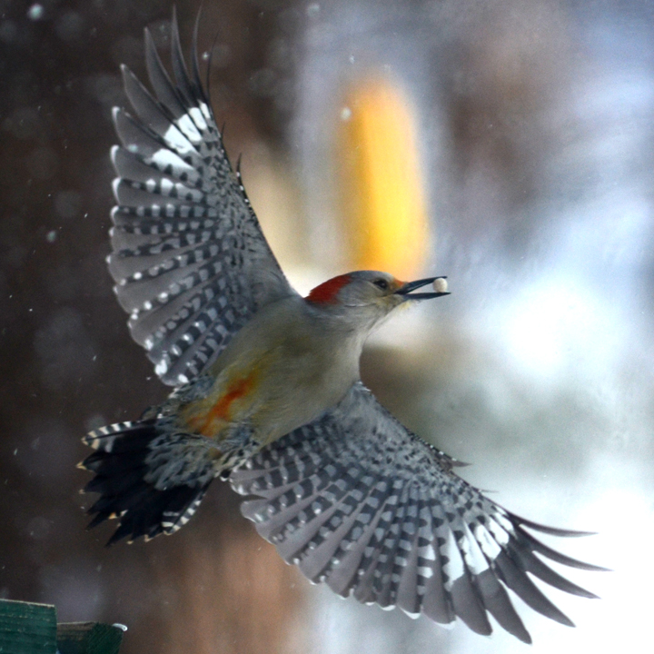 A Mid Air Snack Featured Image