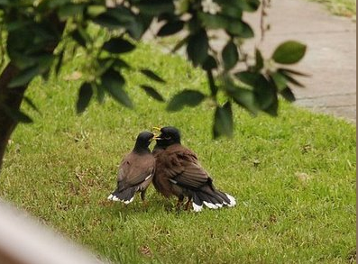 Birds and Their Romantic Lives Featured Image