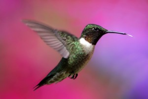 Hummingbird Nectar Do's and Don'ts Featured Image