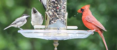 Birds that Like Blazing Hot Blend