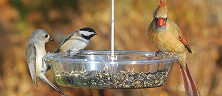 Birds that Like Bountiful Bowl Feeder