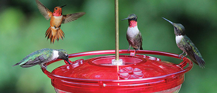Birds that Like Hummer High Rise Feeder
