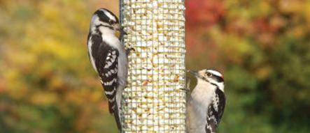 Birds that Like Mighty Mesh Feeder