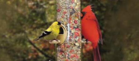 Birds that Like Nutberry Suet Blend