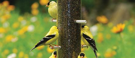 Birds that Like Nifty Niger Feeder