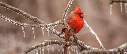 Birds that Like Safflower