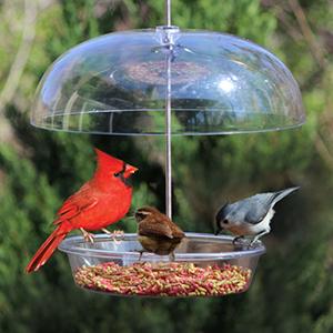 bountiful-bowl-feeder